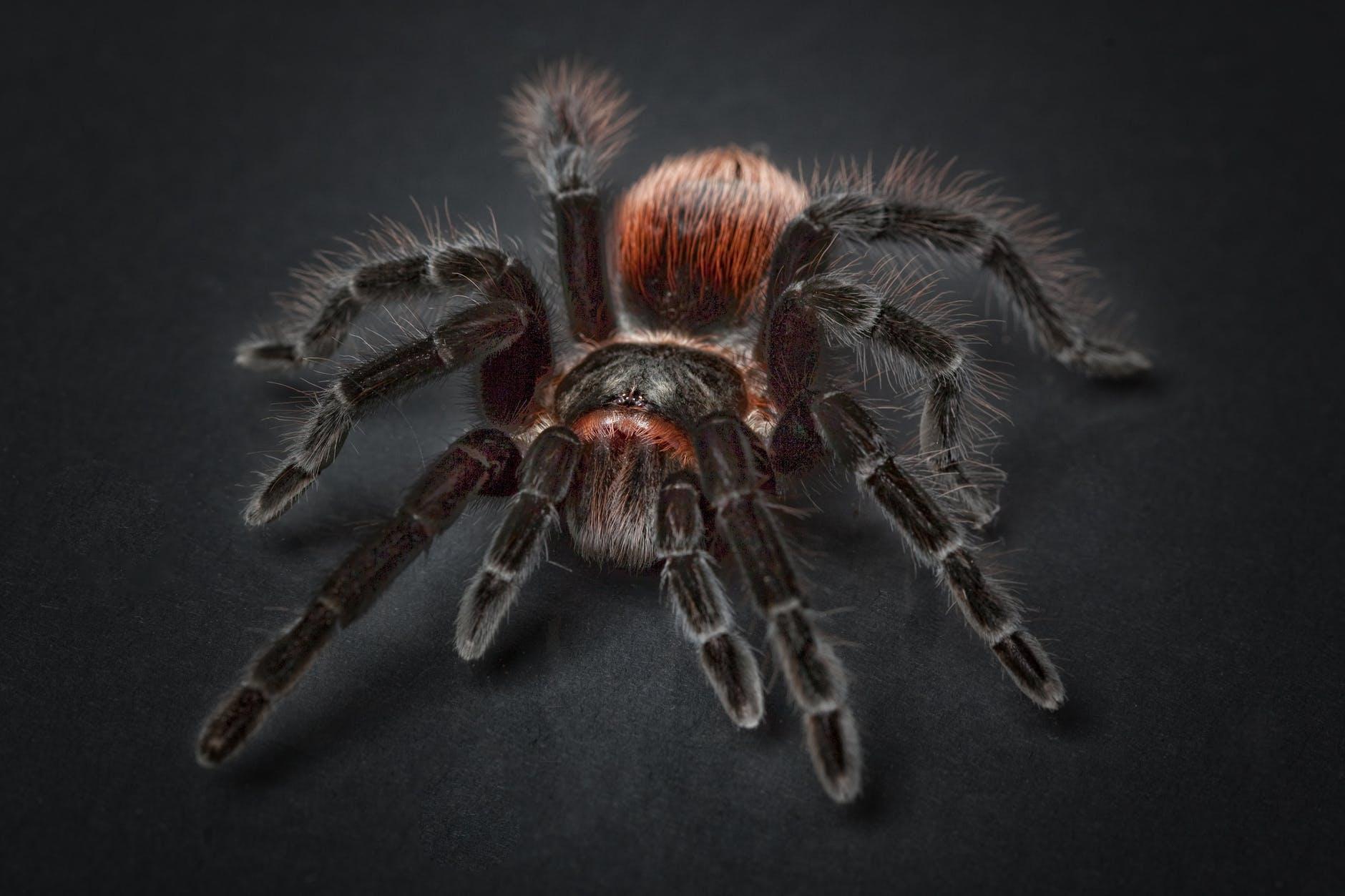 animal arachnid close up eerie