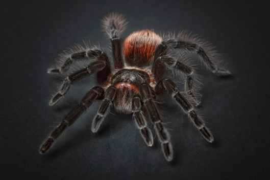 animal arachnid close up eerie