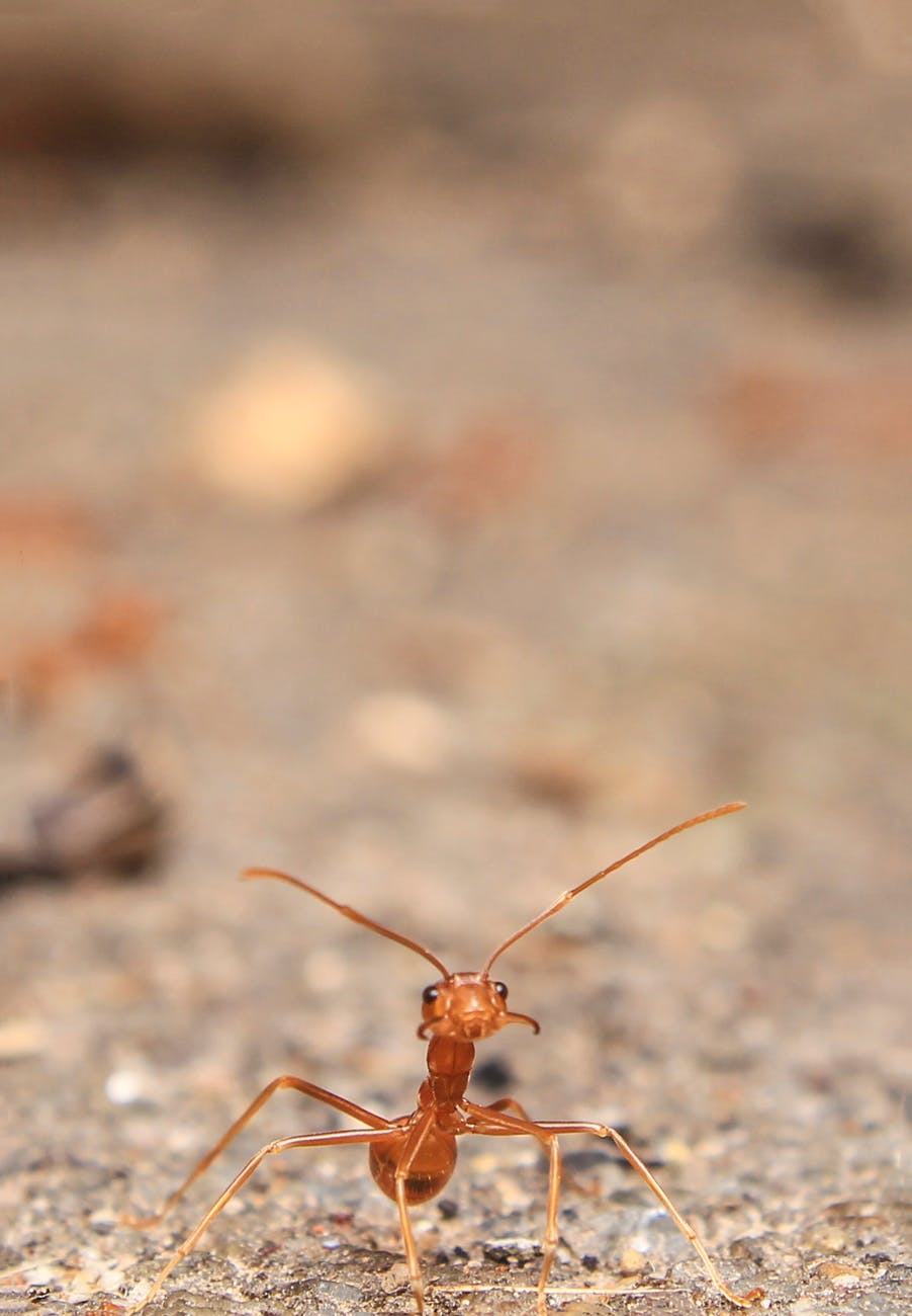 close up photography of ant