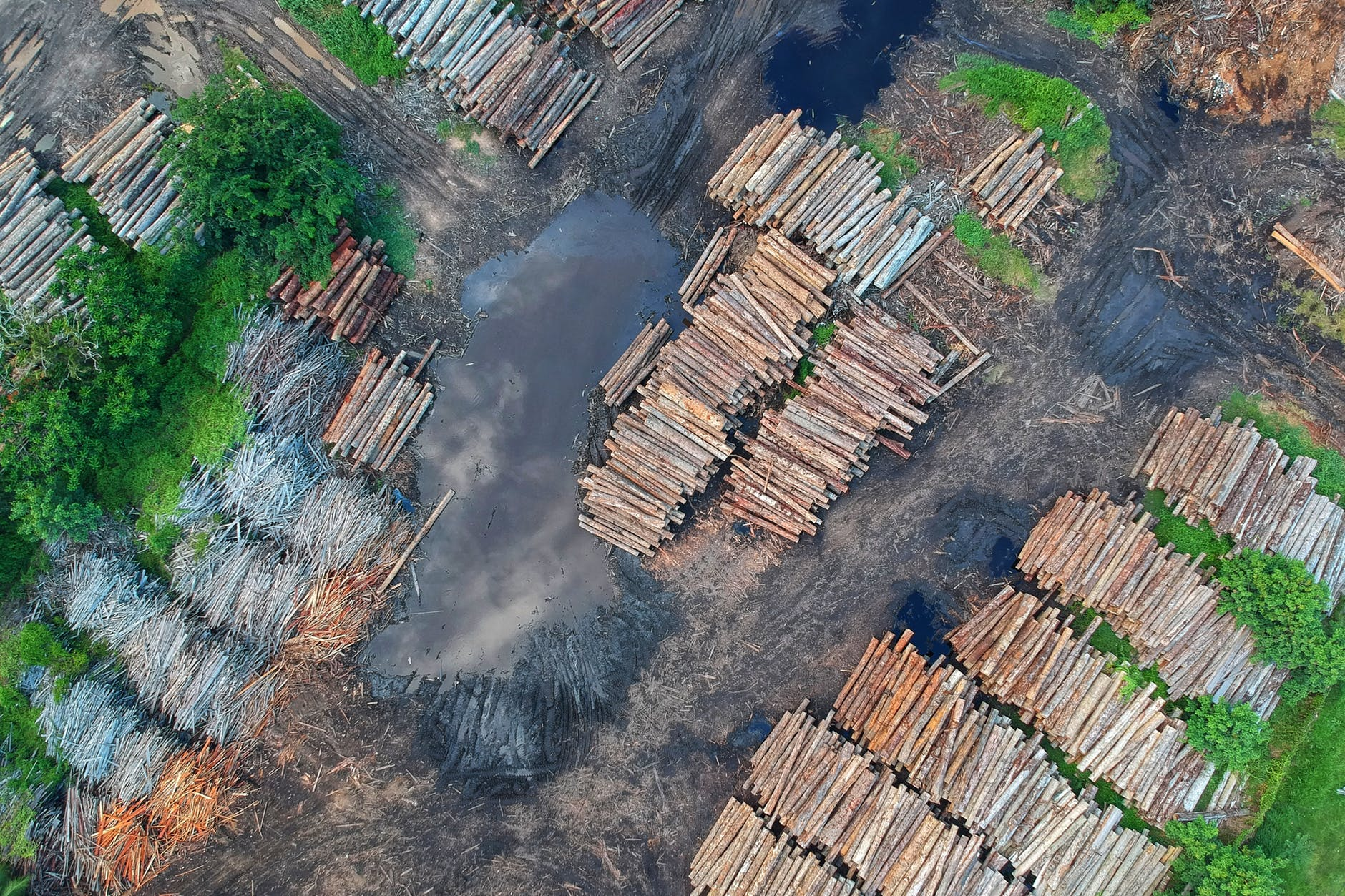 bird s eye view of woodpile