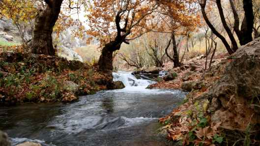 river inside forest near brown leaf trees