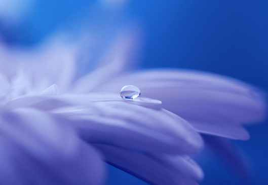 nature romantic blue garden