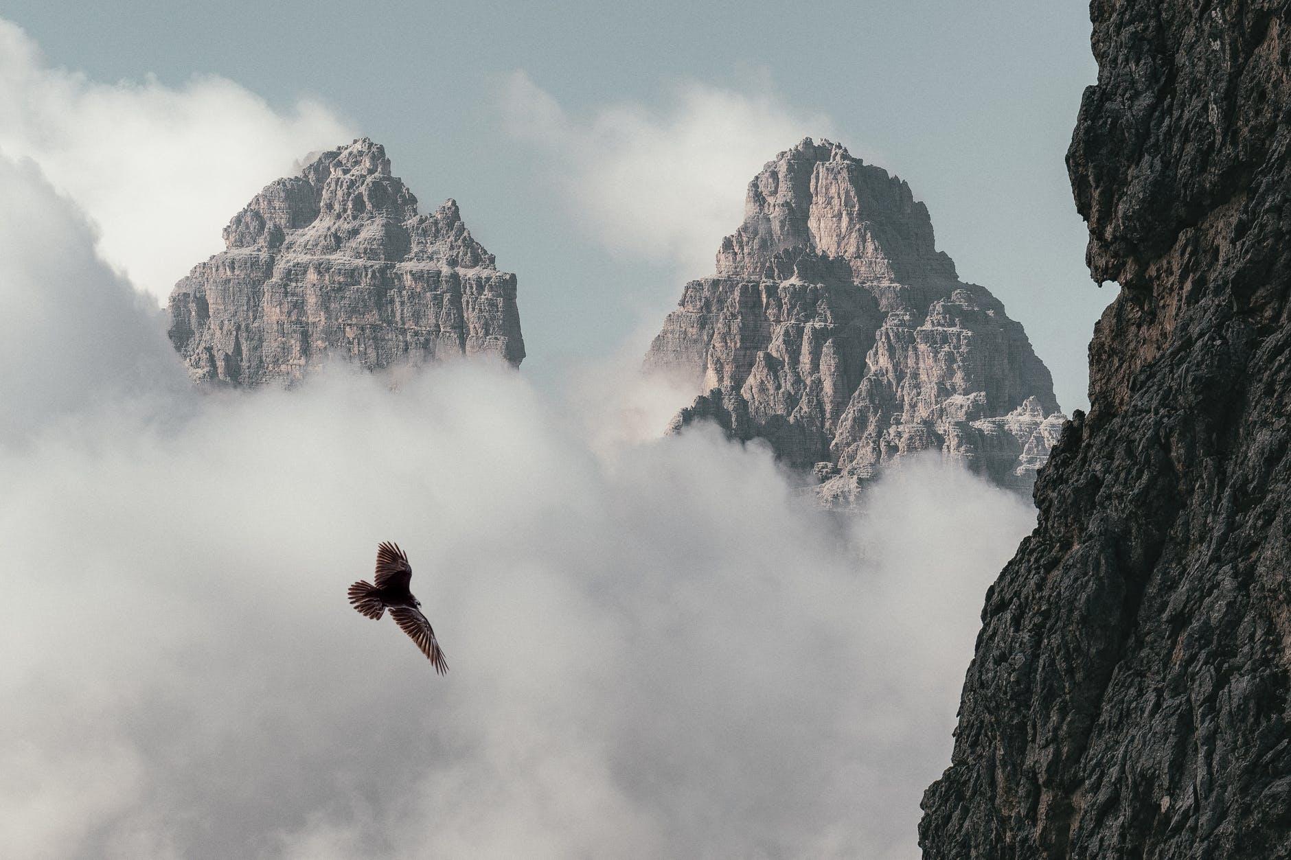 brown bird flying near mountain