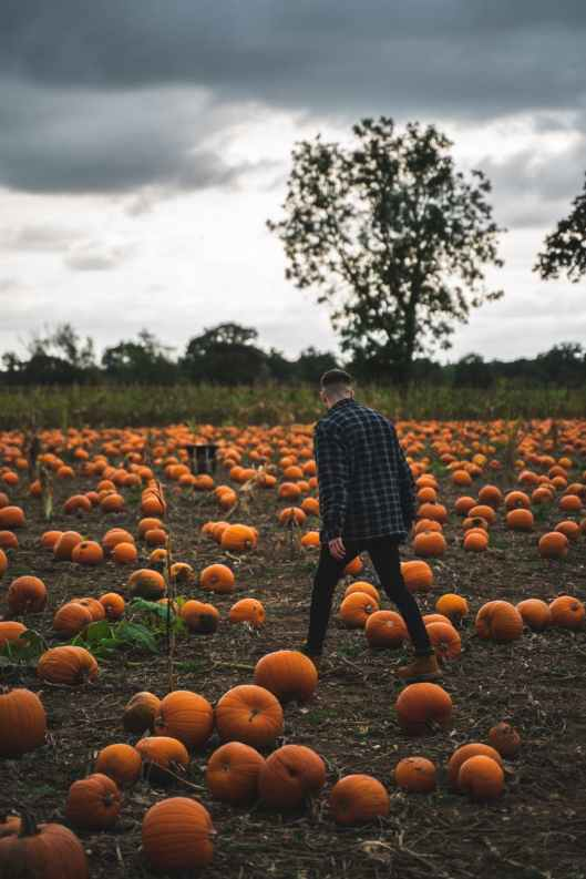 photo of man walking surrounded with pumpkins