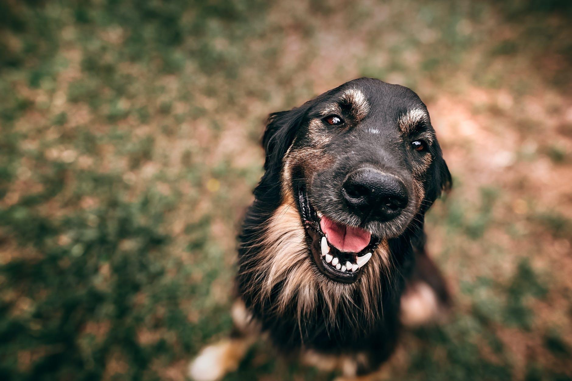 close up photo of dog