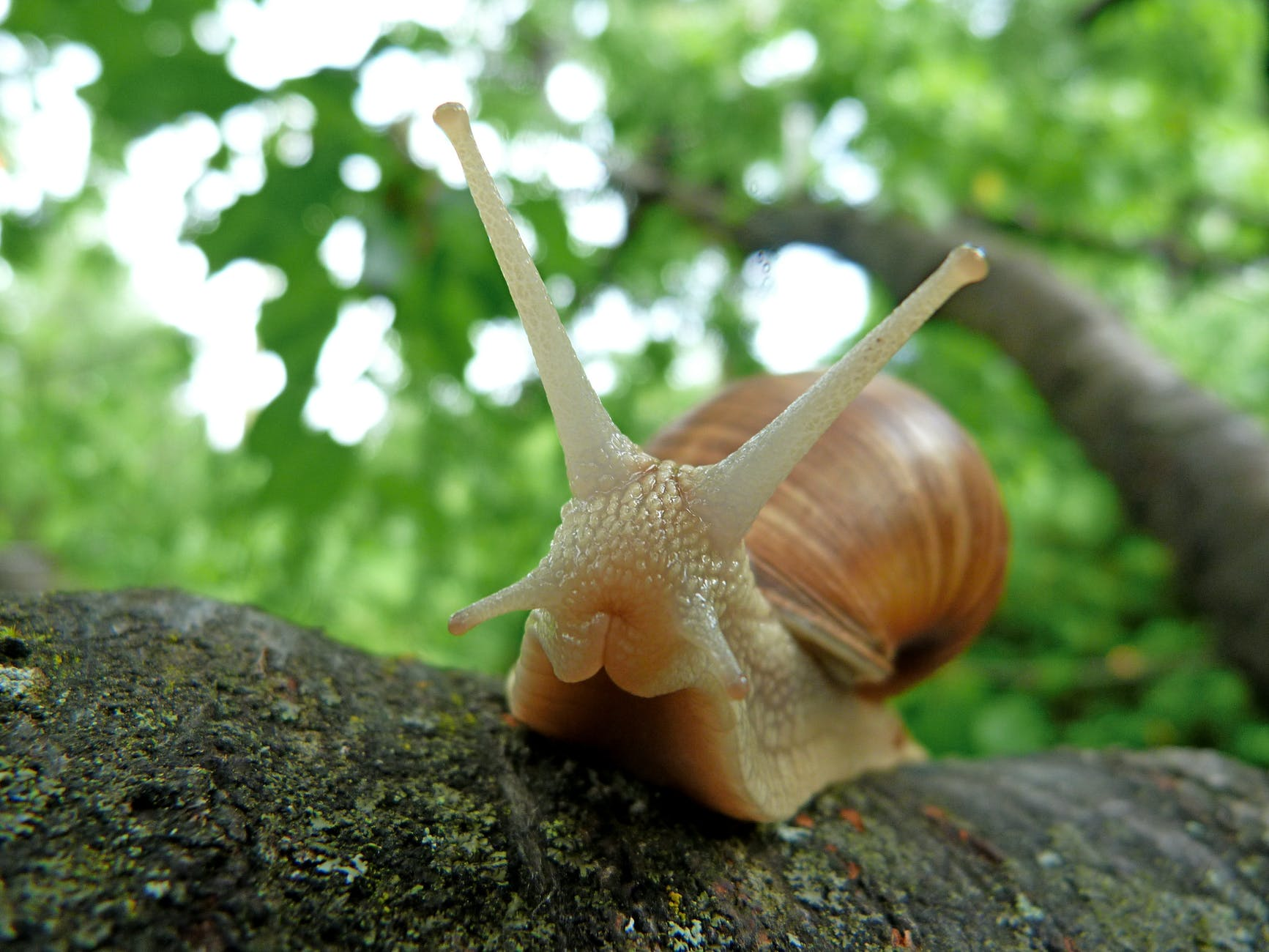 nature macro slow snails