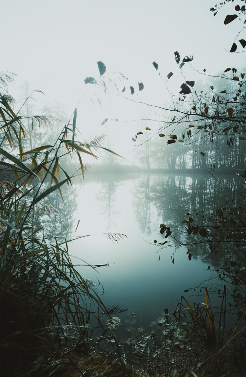 light landscape nature water