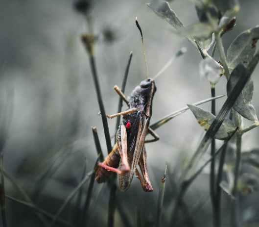 close up photo of grasshopper