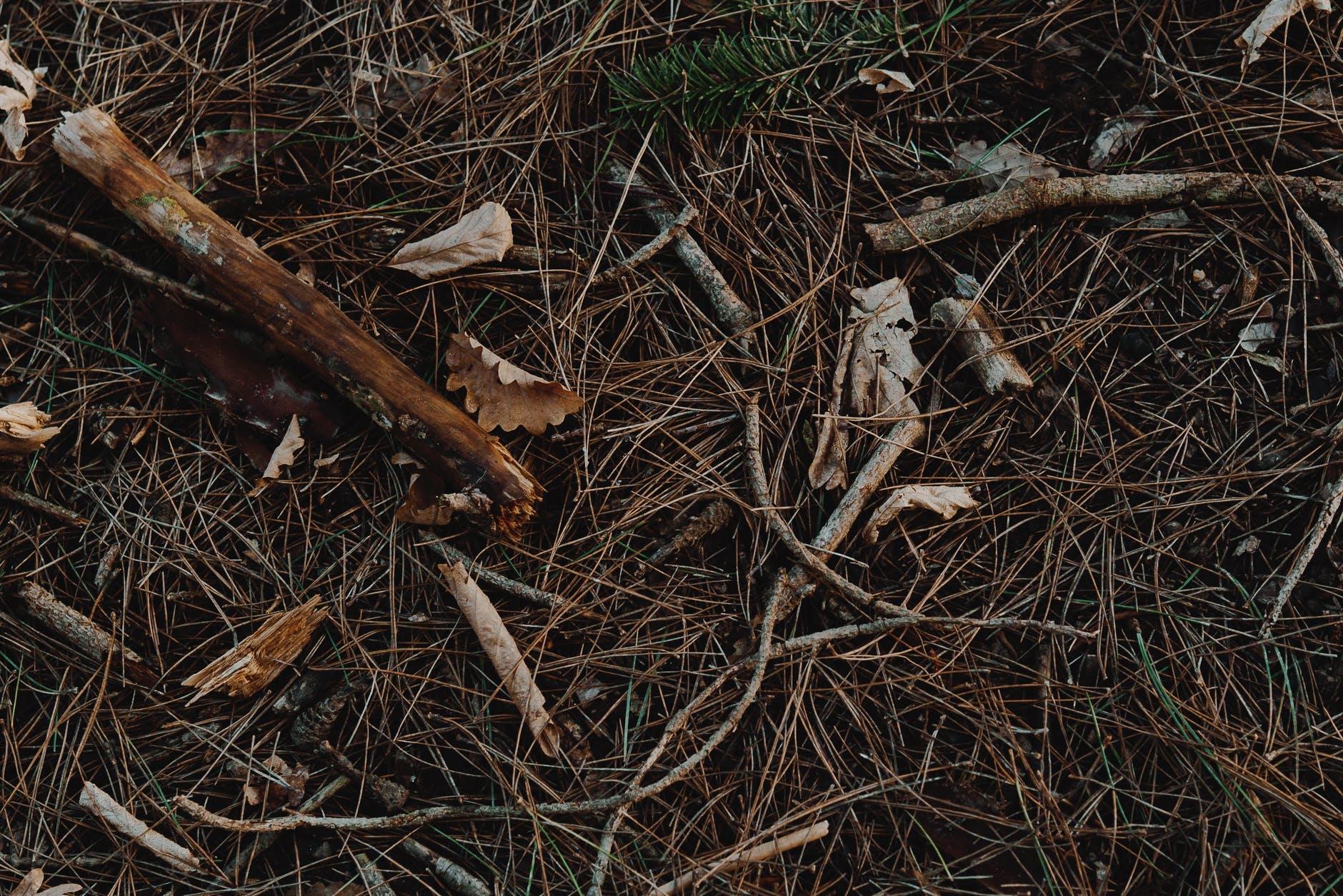 dry broken sticks