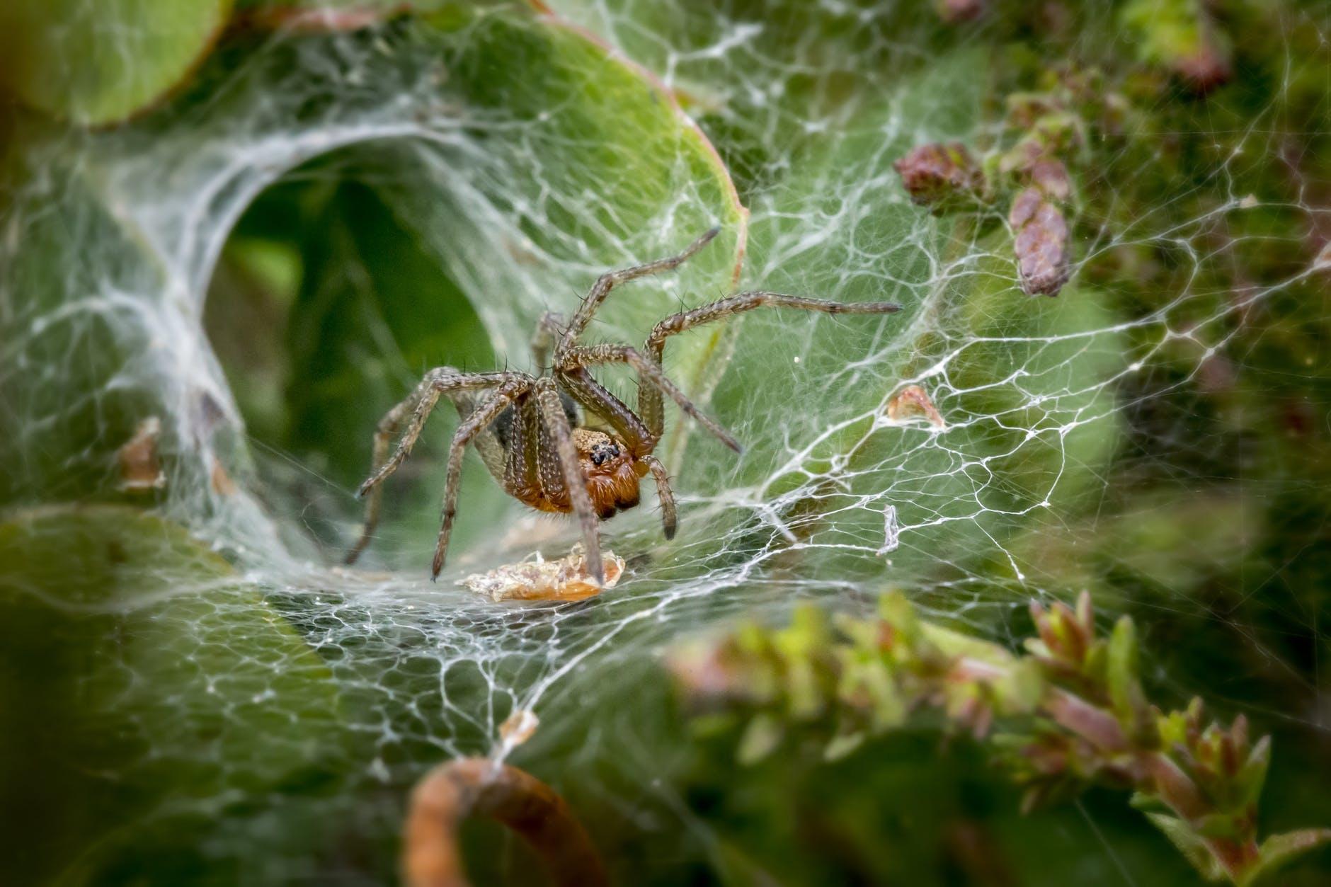brown spider on spider web