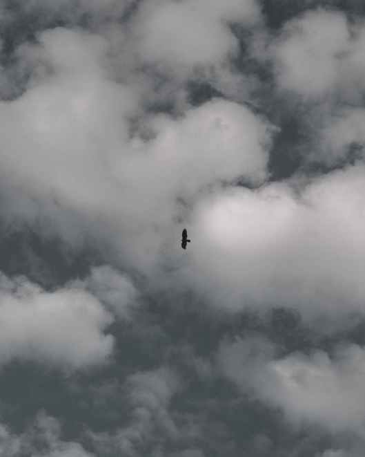 black bird flying under white clouds